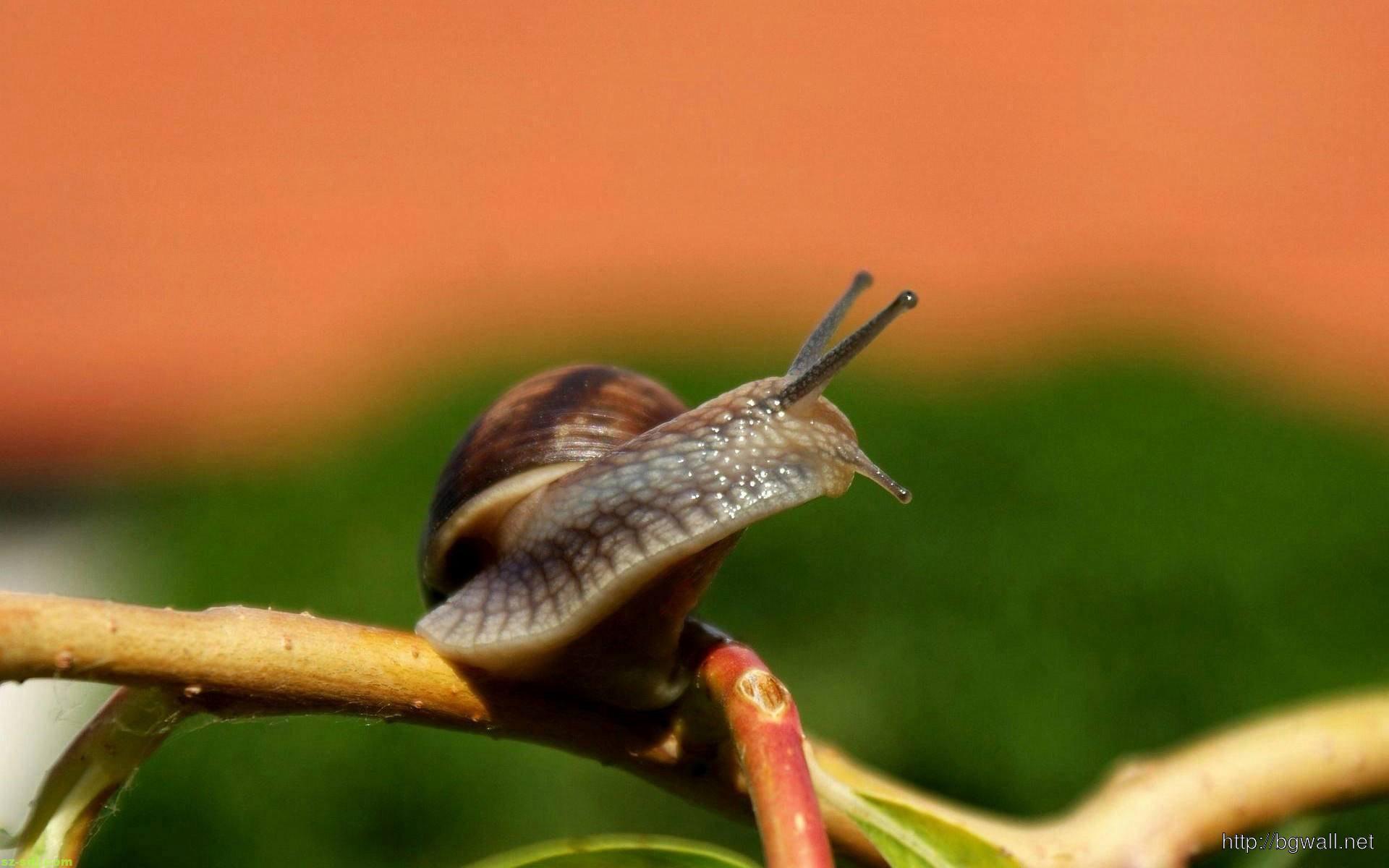 Best Snail Macro Wallpaper Hd  Background Wallpaper Hd