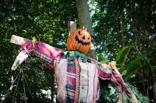Now that's a scary scarecrow