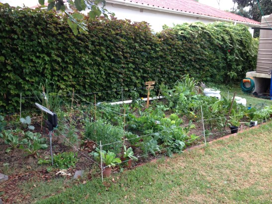 Another view of the vegetable patch.