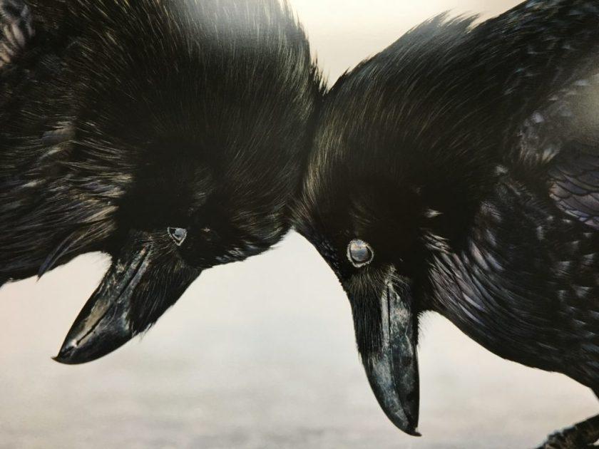 Audubon in Birmingham Alabama