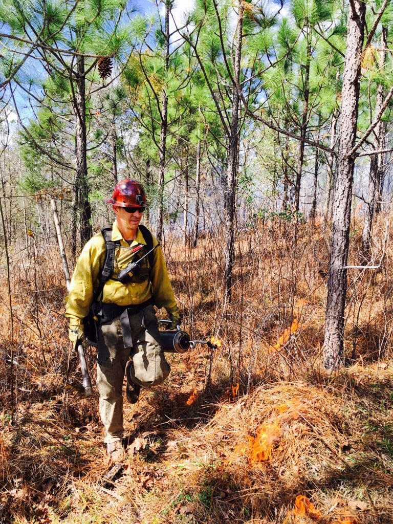 Snap, crackle, pop®! The Nature Conservancy bringing back Alabama's longleaf pine forest with fire