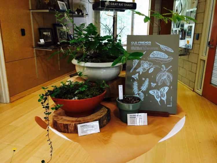 Ruffner Plant Sale