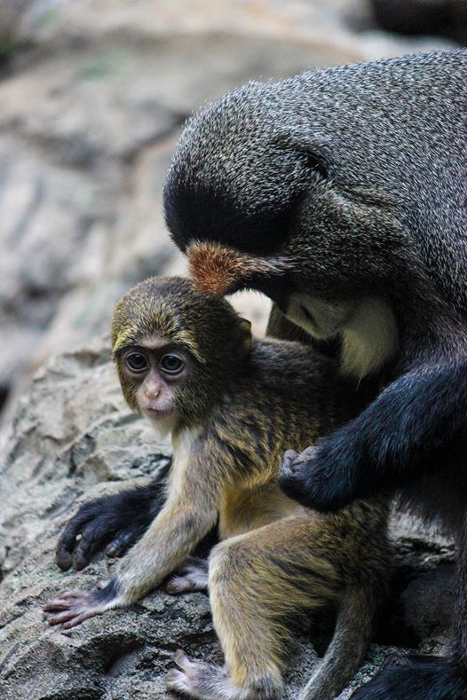 The Birmingham Zoo Mother's DAy WEekend Birmingham aL Bham Now