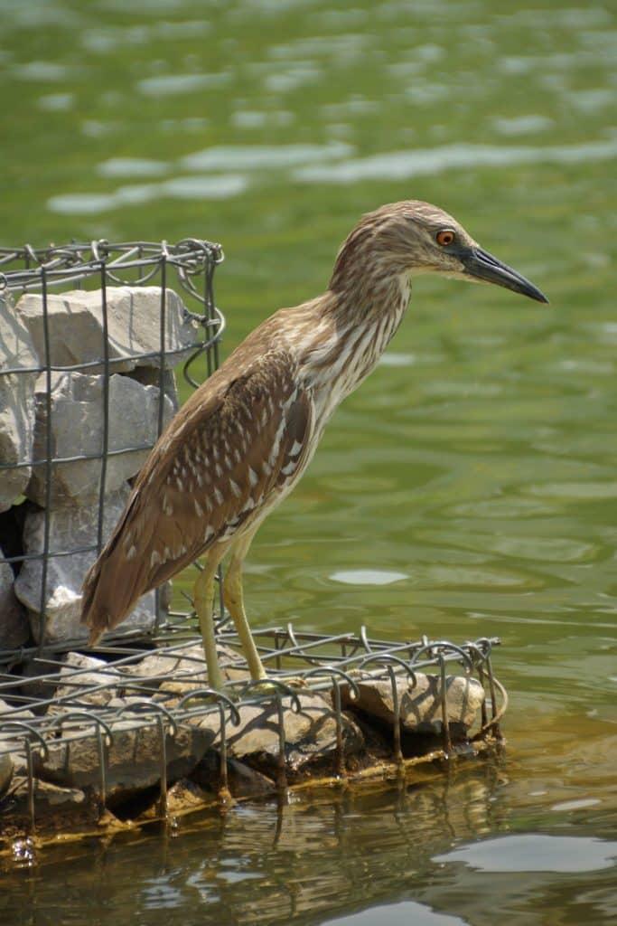 Birds of Birmingham Parks