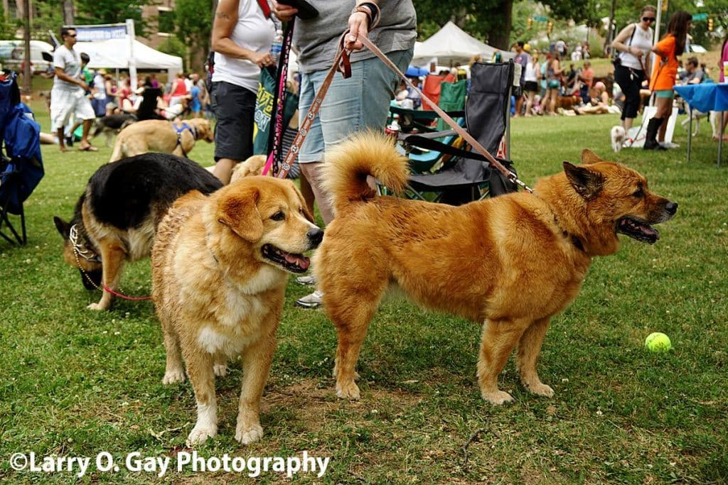 Celebrating our community's beloved animals – Do Dah Day 2017 (photos)