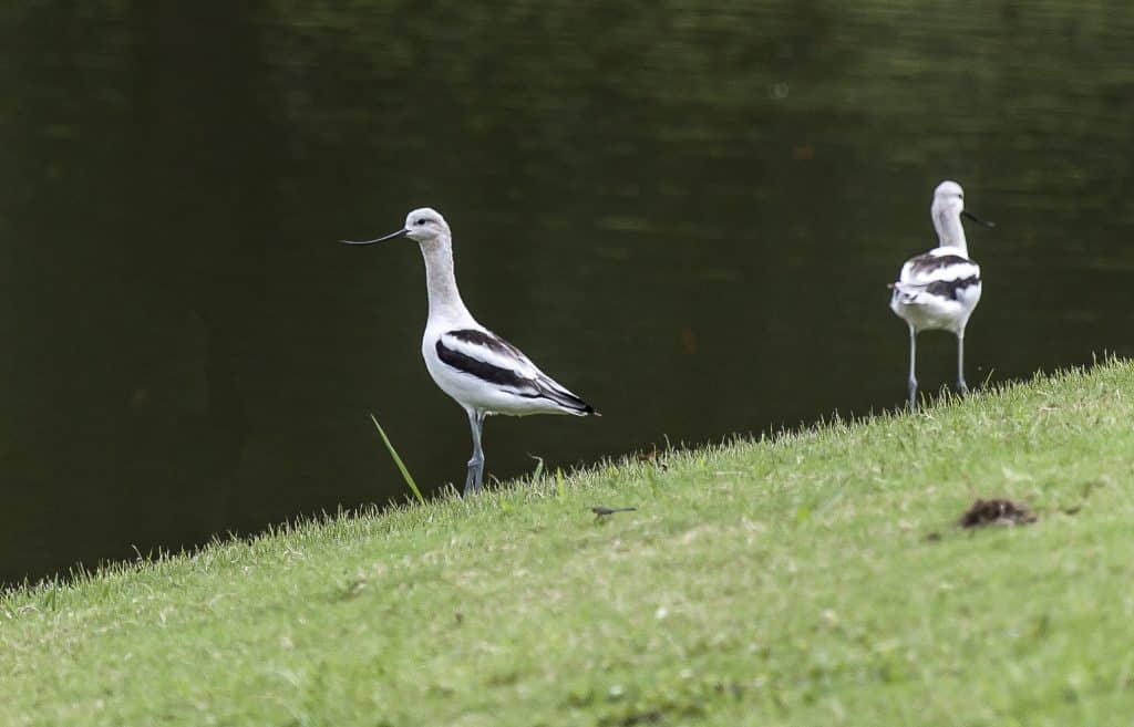 """Bham Now's Nature Roundup – """"We love birds"""" edition – May 18th"""