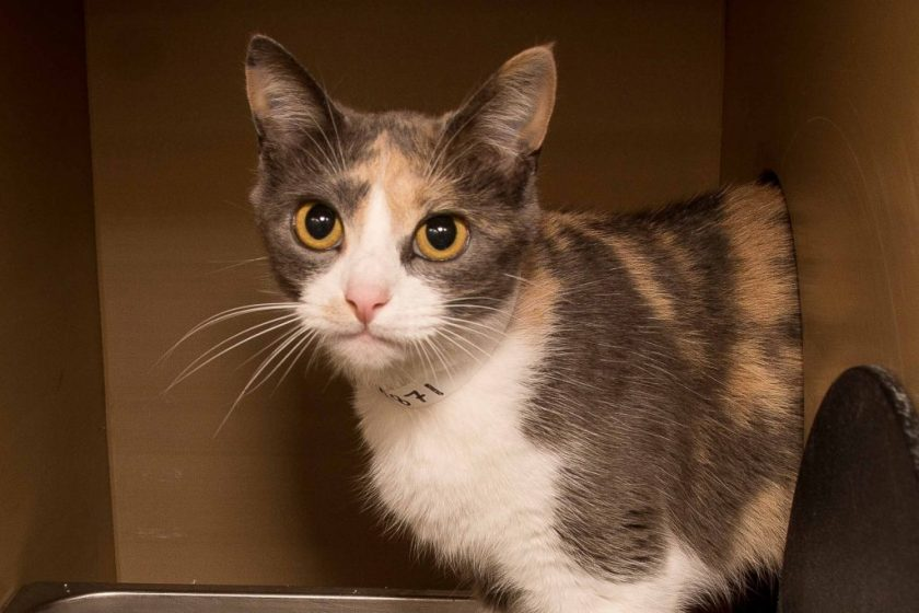 Adorable and Adoptable Pet of the Week: Lucy Birmingham AL Bham Now