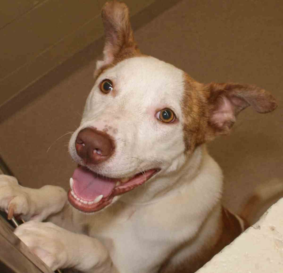 Adorable and Adoptable Pet of the Week: Dex and Hazel