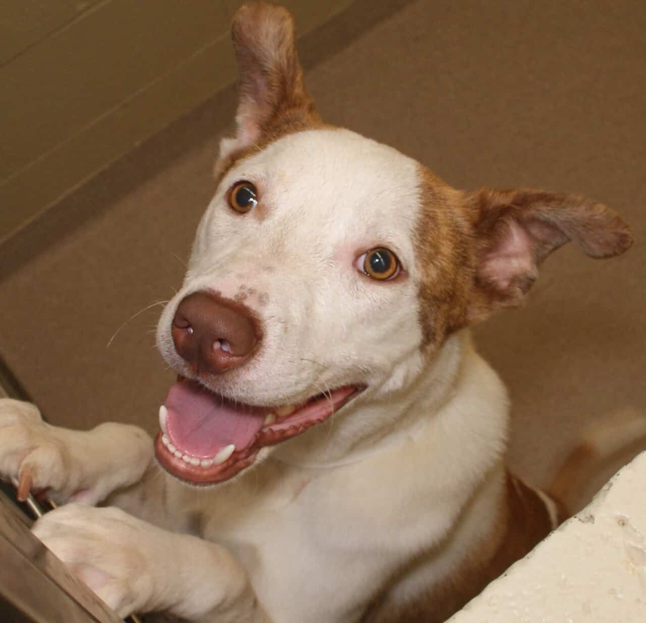 Adorable and Adoptable Pet pups of the Week Dex and Hazel