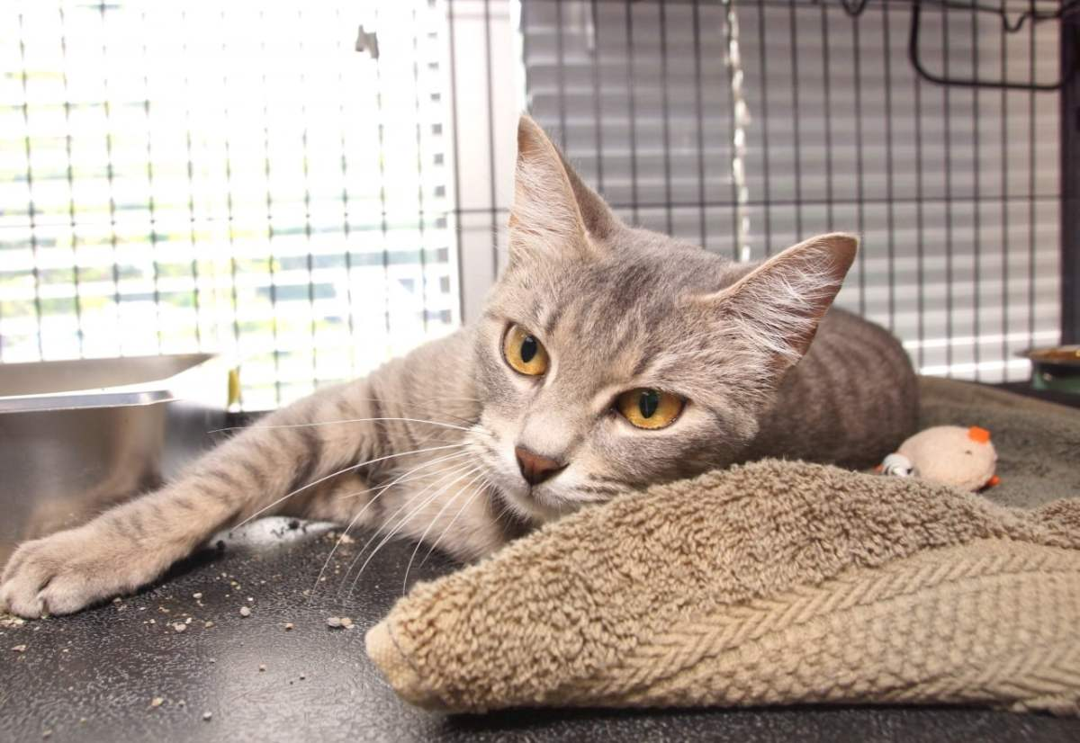 Adorable and Adoptable Pet of the Week: Willow and Kisses