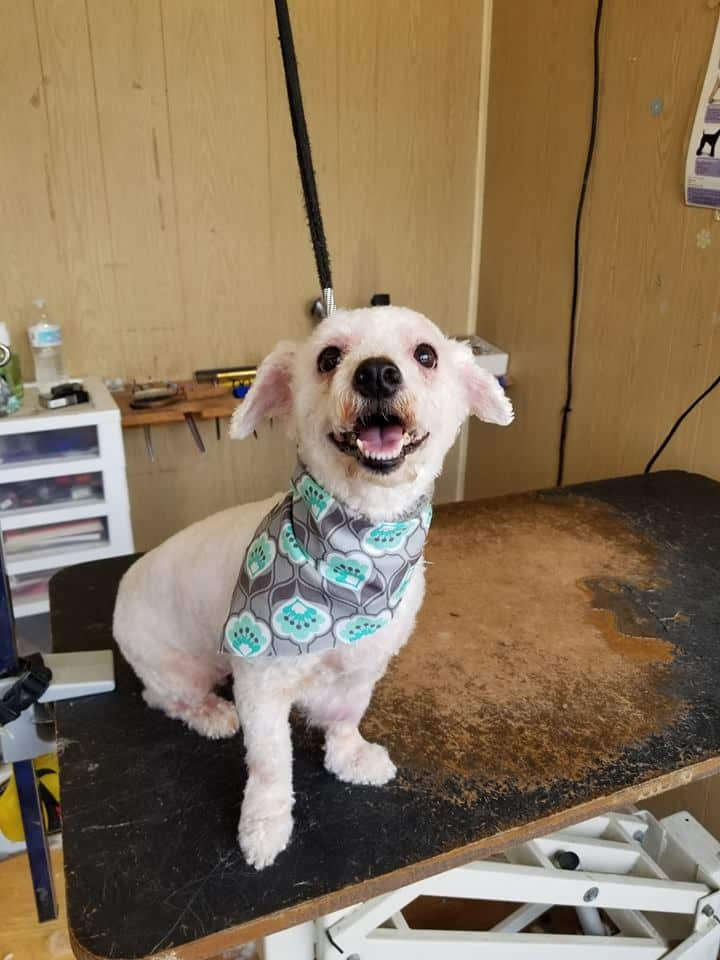 A Birmingham Guide to Local Groomers