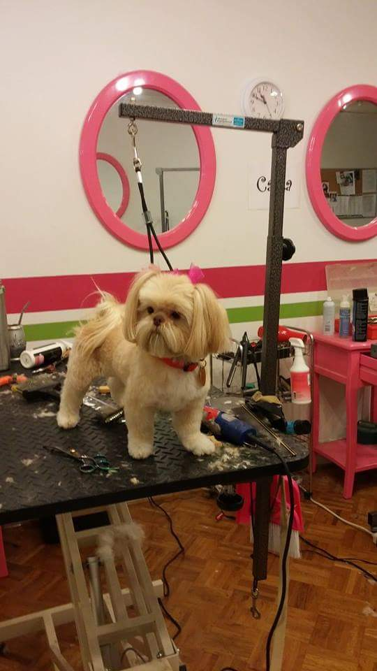 A Birmingham Guide to finding the local pet groomers