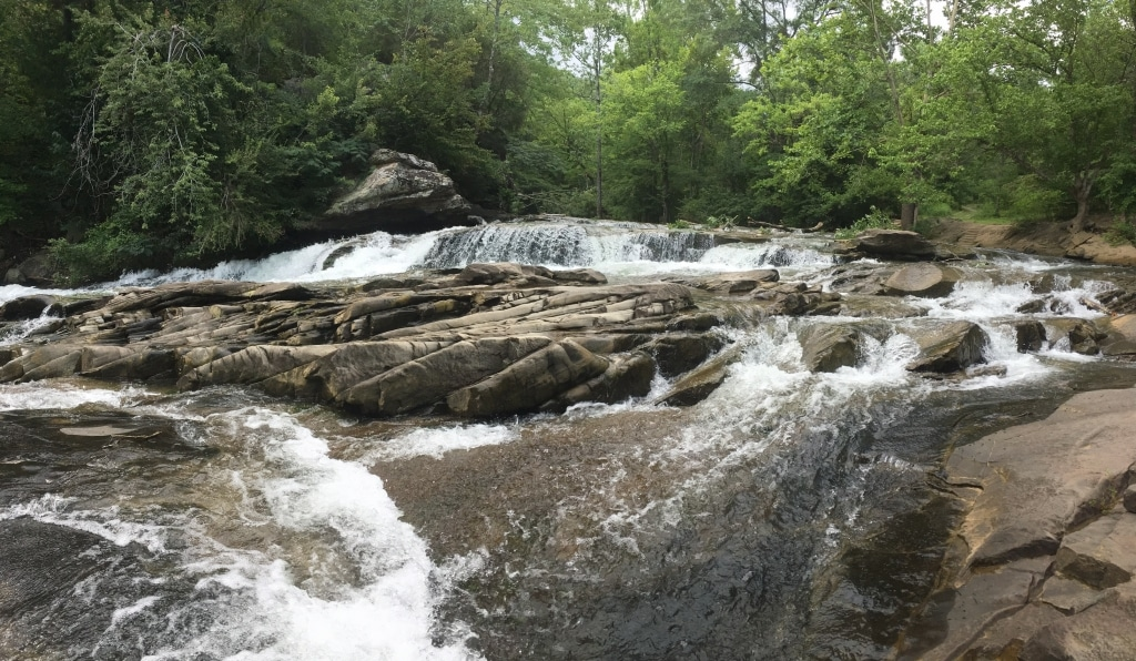 Bham Now Nature Roundup – July 13th