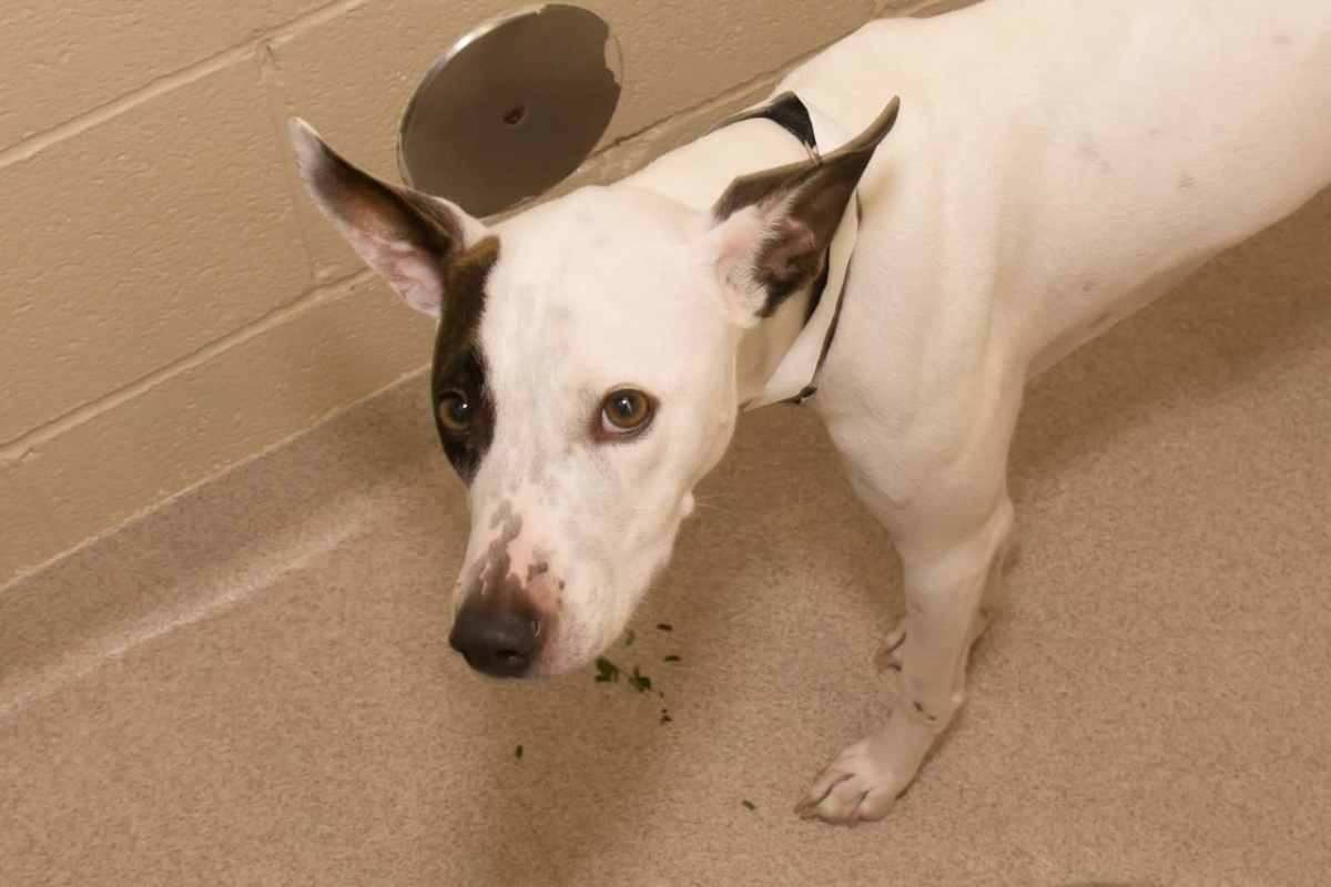 Adorable and Adoptable Pet of the Week: Tom and Chief