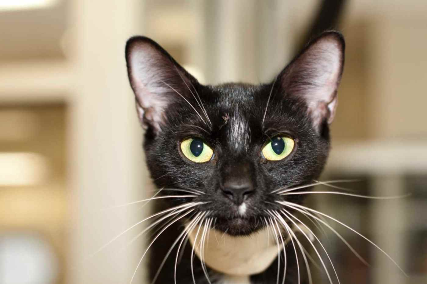 Adorable and Adoptable Pets of the Week Leela and Wiggle