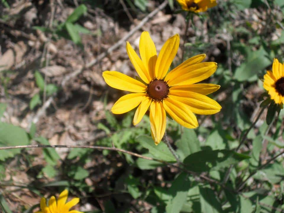 Bham Now Nature Roundup – September 7th