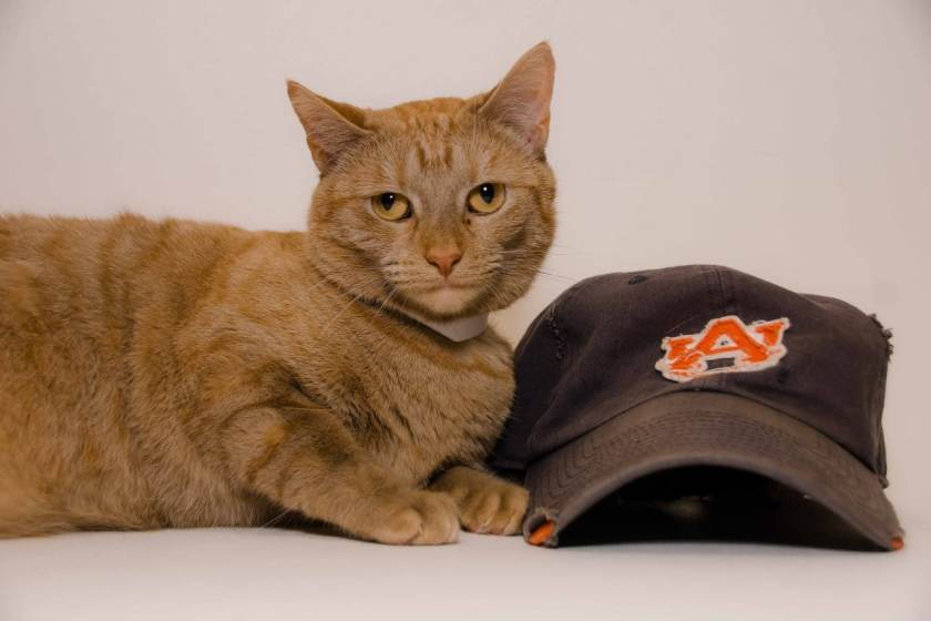 Adorable and Adoptable Pet of the Week Woody and Conway