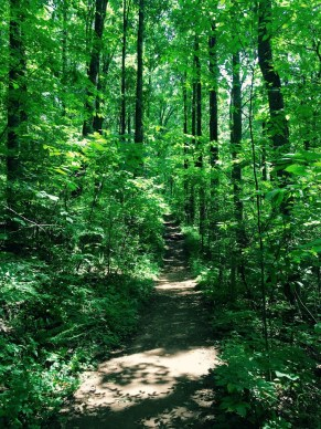 Ruffner Mountain green space