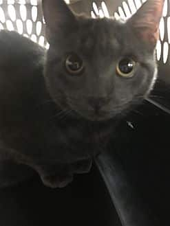 Adorable and Adoptable Pet of the Week: Aladdin