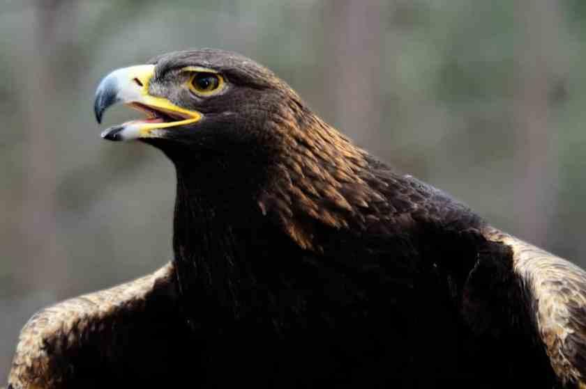 Alabama Birding Trail