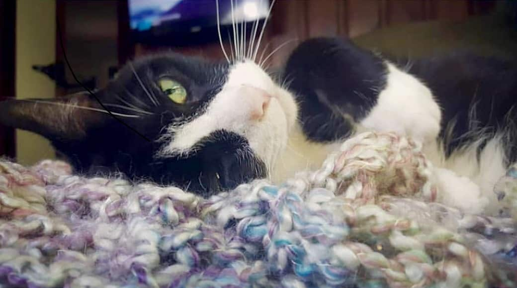 Adorable all-star Instagram cats of Birmingham