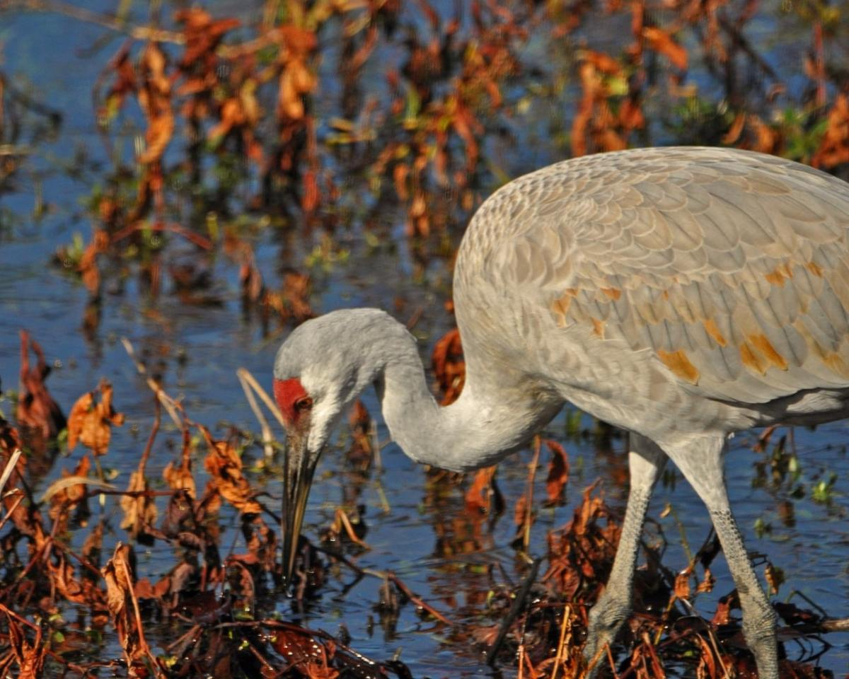 Bham Now Nature Roundup for the week of January 6, 2018