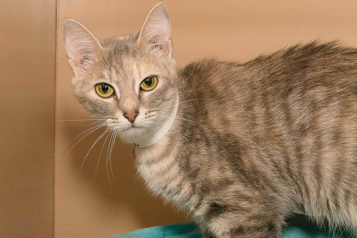 Adorable and Adoptable: Kitten