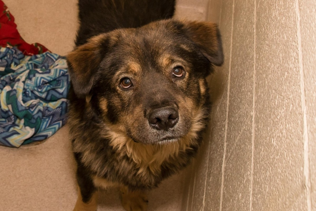 Adorable and Adoptable Pet of the Week: Maine