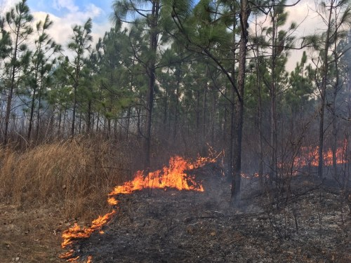 Bibb County prescribed fire