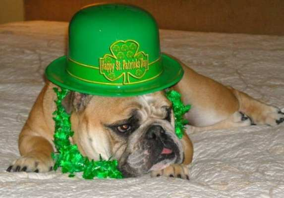 Birmingham, St. Patrick's Day, dog, celebration