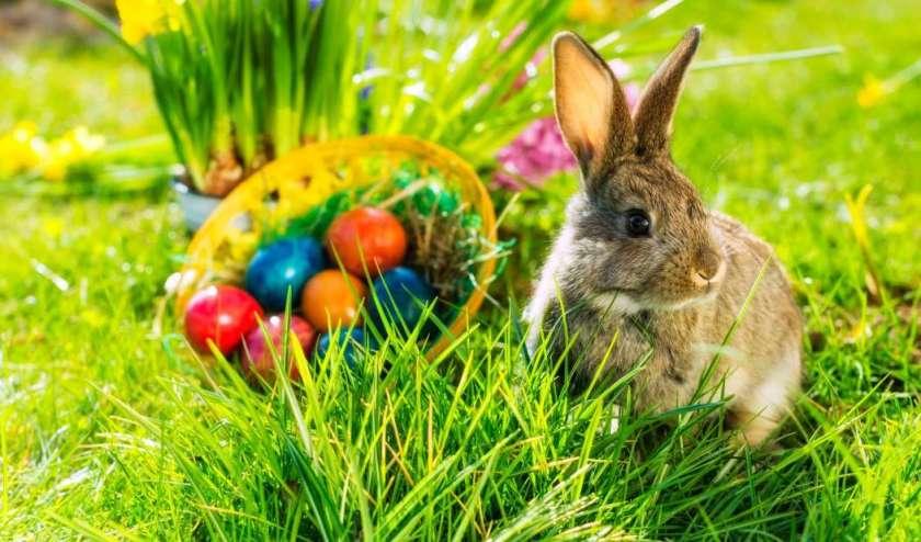 Birmingham, Easter, Easter Bunny