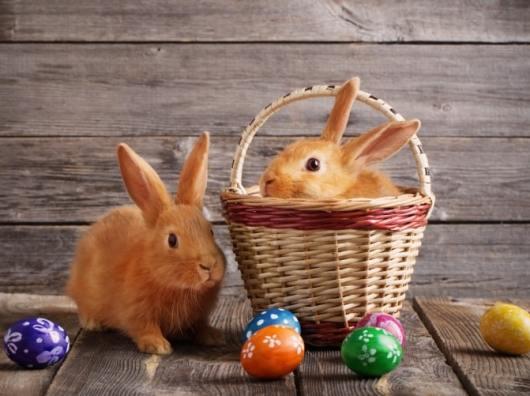Birmingham, Easter Bunny