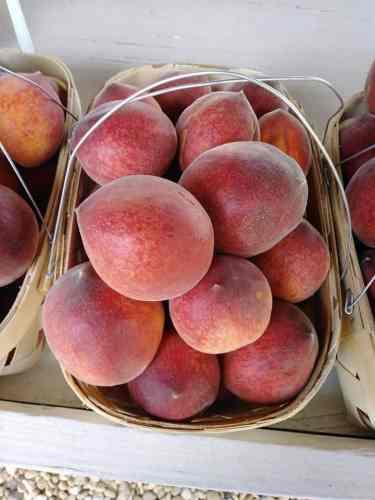 Birmingham, Alabama, U-Pick, May, Peaches, Plums, McCraw Farms