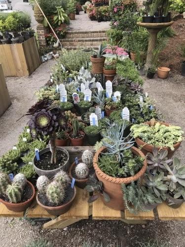 Birmingham, Alabama, Shoppe, Forest Park, succulents trend