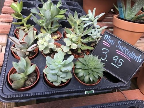 Birmingham, Alabama, Oak Street Garden Shop, Crestline, succulents trend
