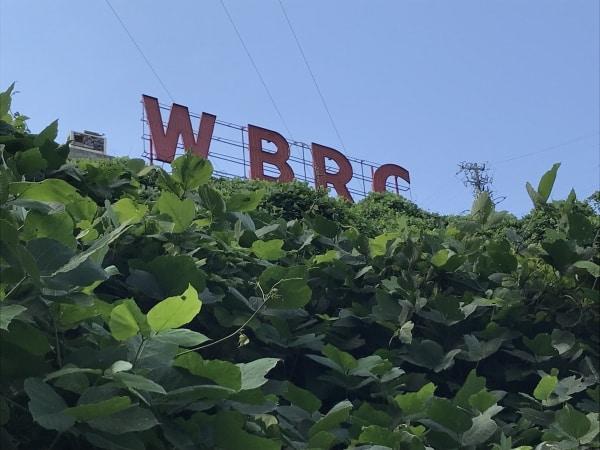 Birmingham, Alabama, Kiwanis Vulcan Trail, August 2018, iNaturalist