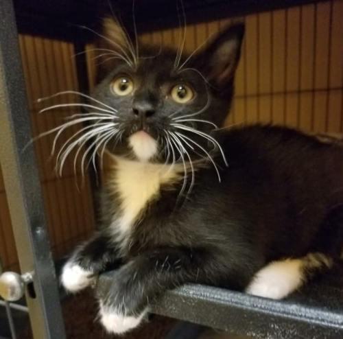 Birmingham, Steel City Cat Rescue