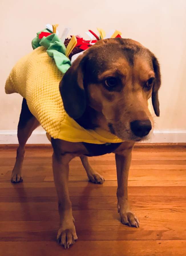 Birmingham, taco costume, costumes, Halloween, October, pets, pet costumes
