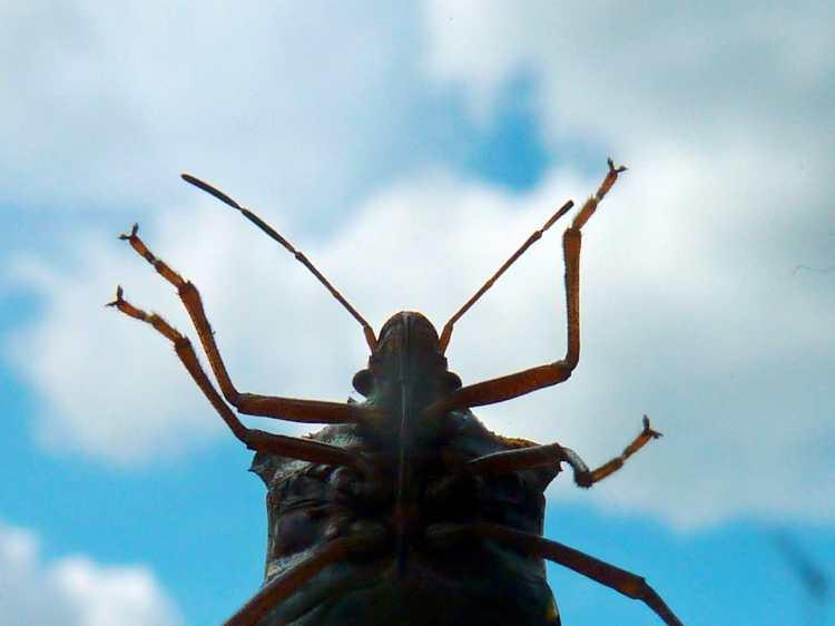 Birmingham, Alabama, stink bugs