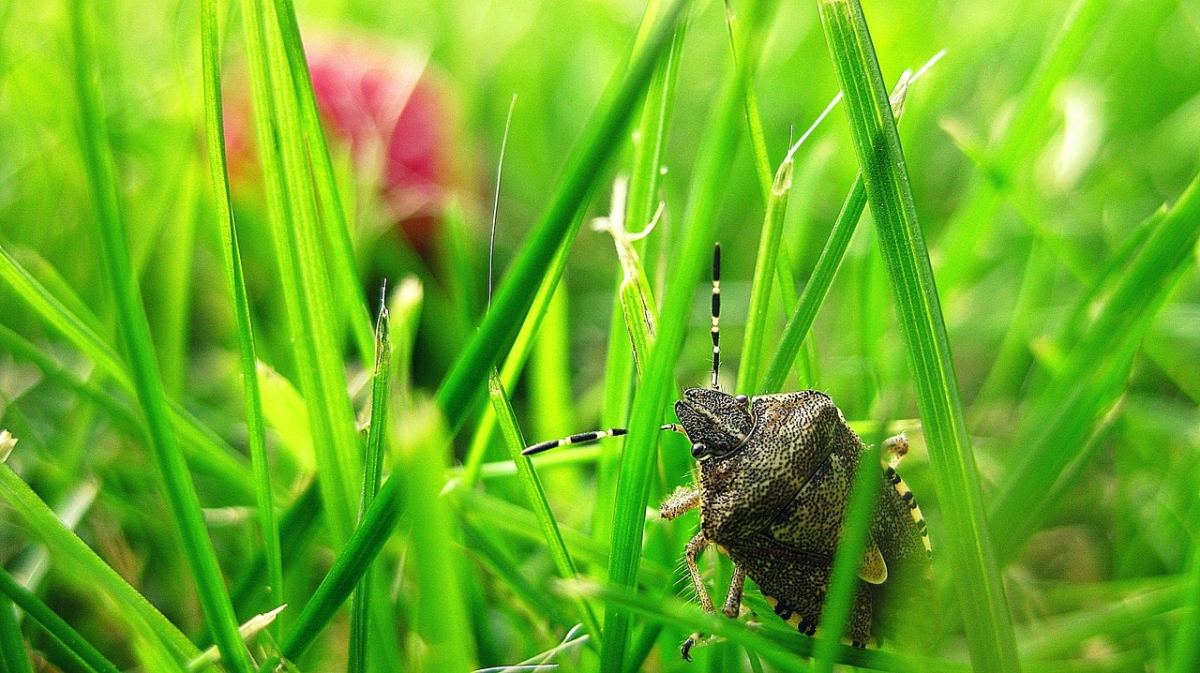 Stink bugs in Birmingham: by any other name, they'd stink the same