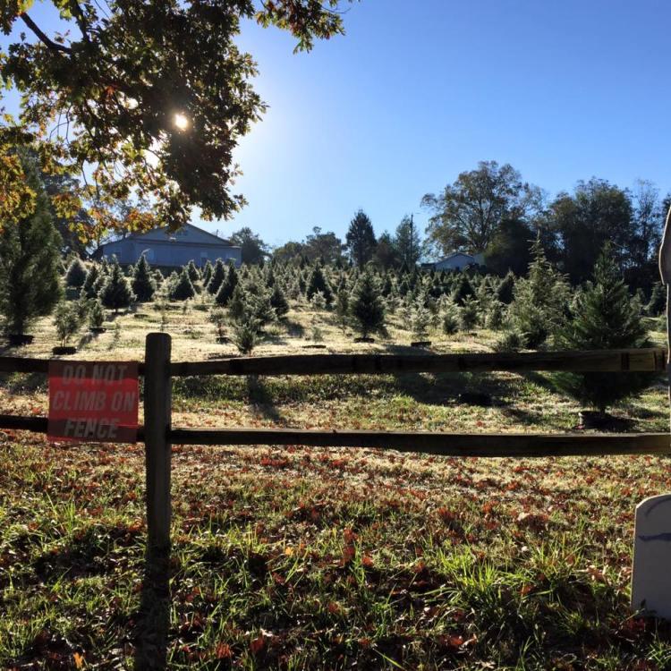 Pine Hill Farms, Tarrant, Alabama, Christmas tree farms