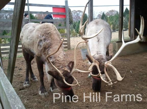 Pine Hill Farms, Tarrant, Alabama
