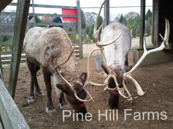 Pine Hill Farms, Tarrant, Alabama