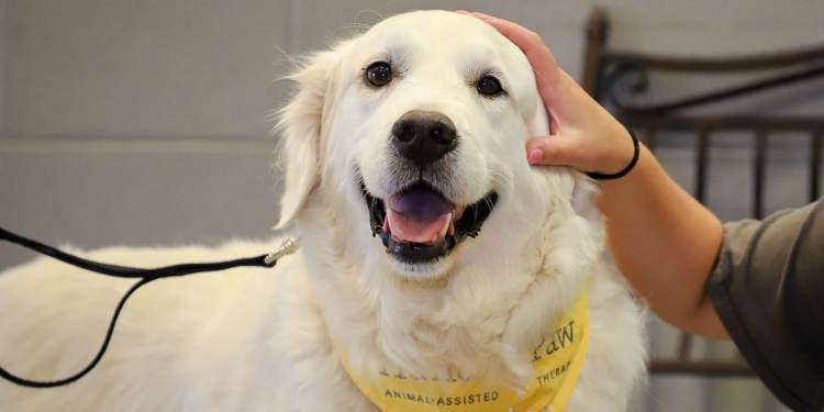 Hand in Paw brings comfort and joy through Animal-Assisted Therapy