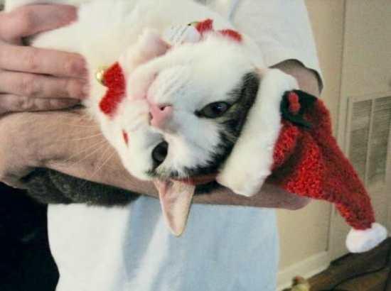 Birmingham, pets, Christmas, Santa, cats