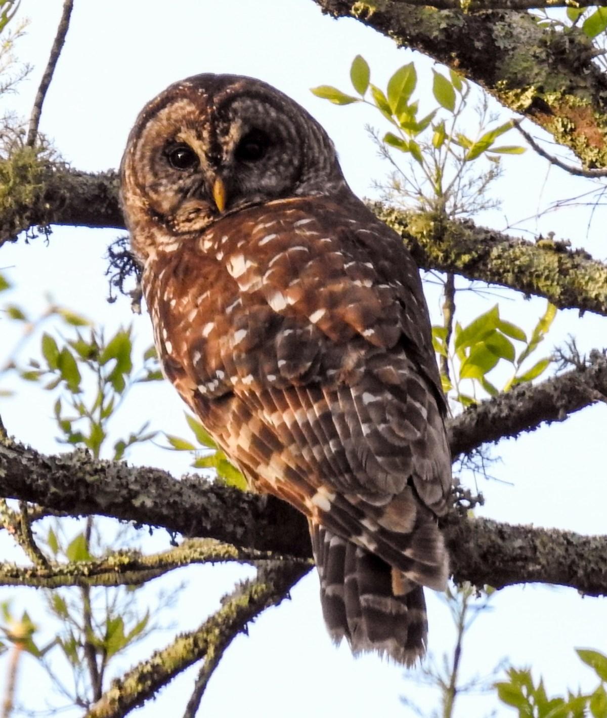 Hays Nature Preserve/Goldsmith Sanctuary (NABT #29)