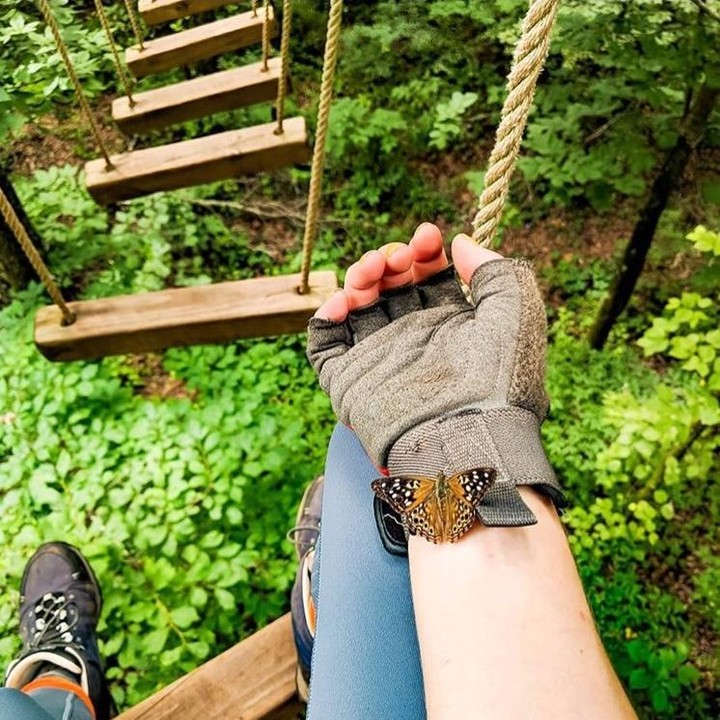 Birmingham, Alabama, Red Mountain Park, ropes course, butterfly