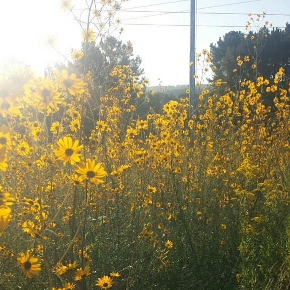 Birmingham, Alabama, Red Mountain Park, yellow flowers, October