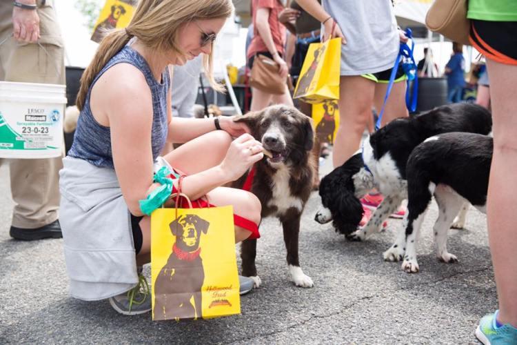 Birmingham, The Summit, Fido Fest, dogs, pets, animals, Greater Birmingham Humane Society