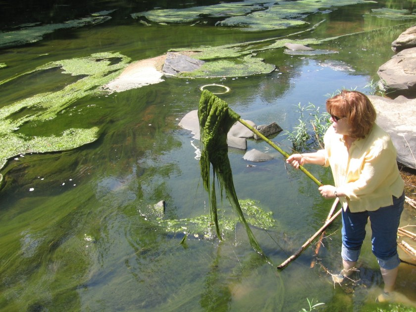 Algae Blooms in the Cahaba river are a huge problem for the ecosystem. Caused by increased phosphorus levels in the water, the blooms deplete the water of oxygen , thus killing off nearby fish.